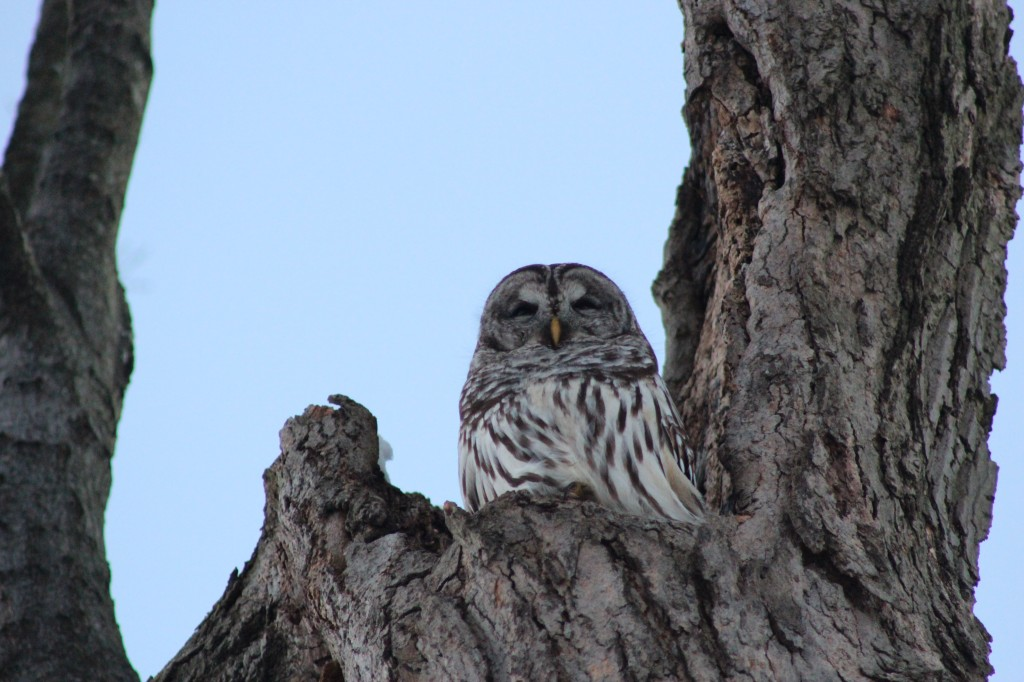 Profile-owl-2014-jan-tree
