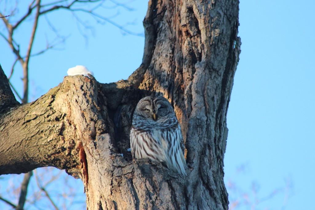 owl-sun-best-4