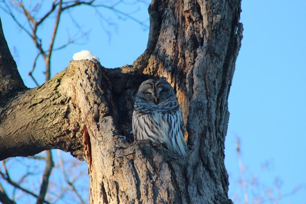 owl-sun-best-focus