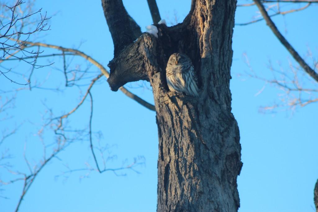 owl-sun-tree-med