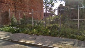 otr-west-garden-weeds-2